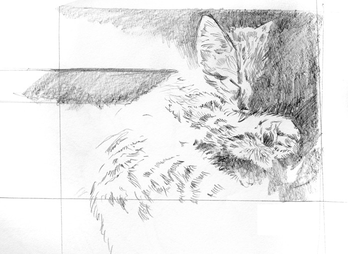 Pencil sketch of Sambi asleep.