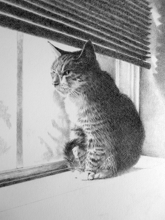 Michael Brugh's graphite drawing of Freda the cat, update number 6.