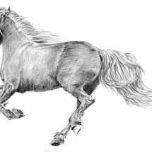 Day2_On-the-Move_horse, A Drawing-a-Day